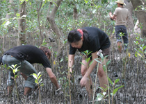 Annual reduction of 72 tons of CO2 by planting mangrove trees