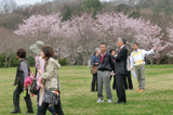 Cherry blossom viewing event